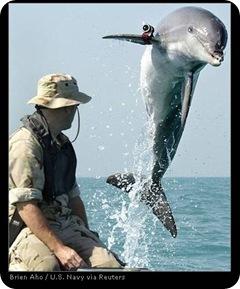 Navy Dolphins - Presentation Signature