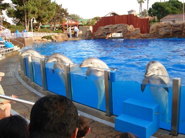 10 bonnes raisons de ne pas se rendre dans un delphinarium - Jeux gratuit de dofin ...