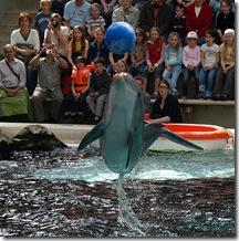 Hobby-Photograph - Delphinarium du Zoo de Duisburg