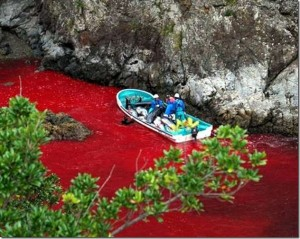 Massacre des dauphins à Taiji, Japon - Crédit photo: Sea Shepherd Conservation Society