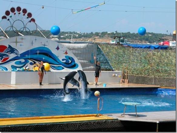 Derrière l'image joyeuse des delphinariums se cache une réalité plus triste