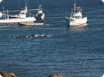Save Japan Dolphins - Pêcheurs à Taiji
