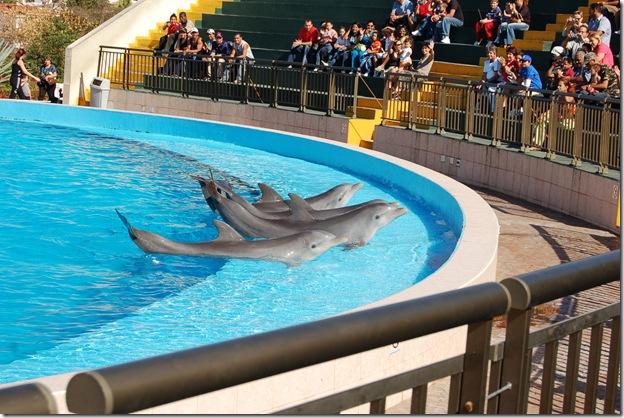 amycqx - Delphinarium à Cuba