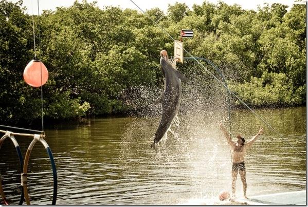 photoderek - Un delphinarium à Cuba, avec un dauphin effectuant un tour