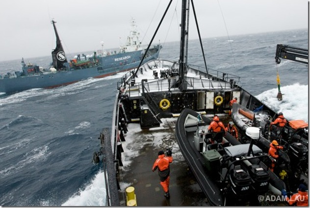 The Japanese harpoon whaling vessel the Yushin Maru No. 2 crosses the bow of Sea Shepherd's MY Steve Irwin as Sea Shepherd deck crew members prepare a fast boat to make a pursuit in Antarctica's Southern Ocean on Saturday, Dec. 20, 2008.  Sea Shepherd is currently pursuing the Japanese whaling fleet in its 2008-2009 campaign, Operation Musashi. (Photo by Adam Lau/Sea Shepherd Conservation Society)