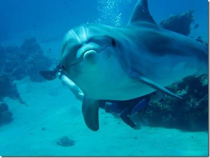 """Carpe Feline - Le """"sourire"""" du dauphin"""