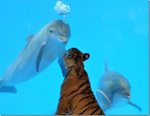 Doli Noody - Rencontre dauphin-tigre, à Chelsea