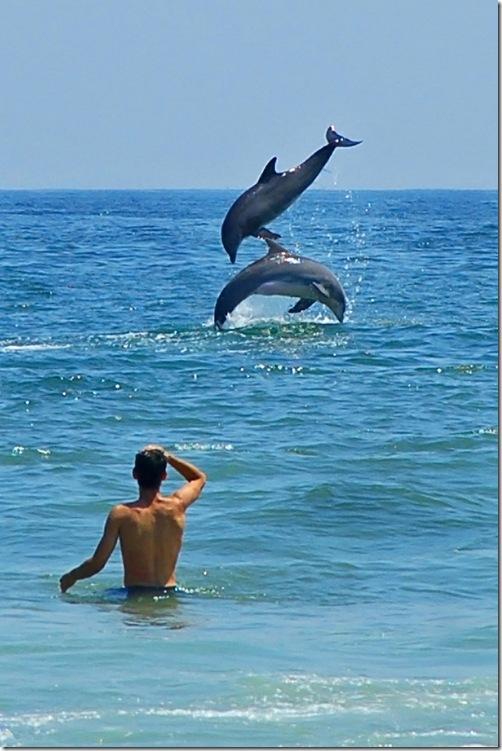 J Duckworth - L'amitié entre hommes et dauphins remonte à l'Antiquité