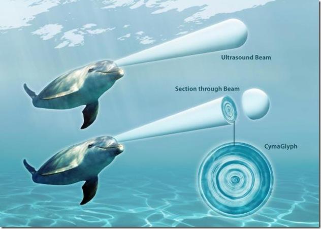 La communication chez les dauphins et le principe du cymascope. Copyright: Jack Kassewitz/John Stuart Reid