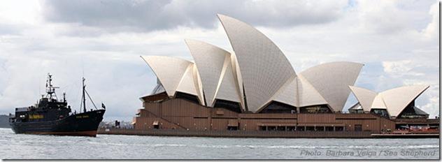 Le Steve Irwin à Sydney, en face du célèbre Opéra. Photo de Barbara Velga - Sea Shepherd