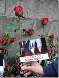 Les manifestants ont déposé des fleurs rouges en l'honneur des dauphins massacrés