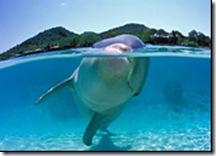 Moko, le dauphin solitaire le plus connu de toute la Nouvelle-Zélande !