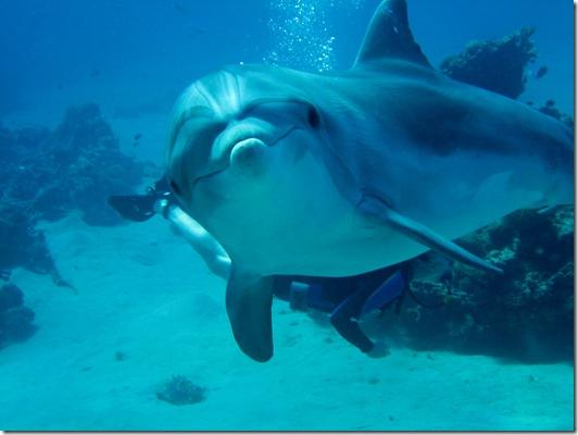 Photo de Carpe Feline - Le sourire du dauphin
