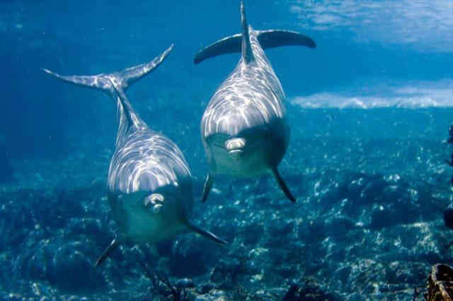 Les dauphins dans la mythologie grecque