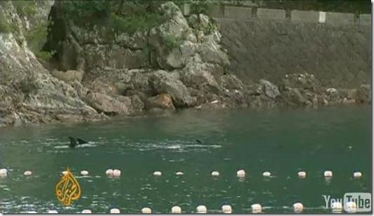 Reportage Al Jazeera sur Taiji - Des dauphins prisonniers de la baie de la honte