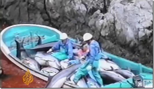 Reportage d'Al Jazeera à Taiji - Images d'archives relatant les massacres de dauphins à Taiji