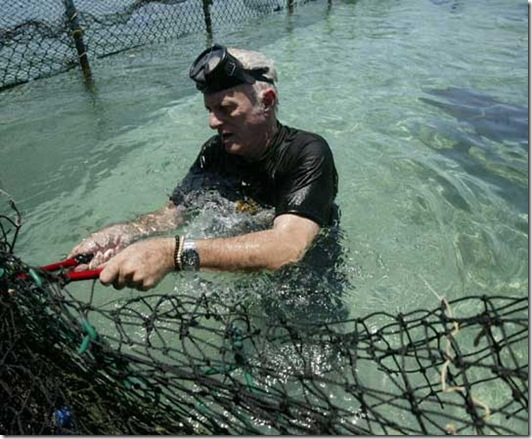 Richard O'Barry libérant des dauphins. Source : http://csiwhalesalive.org/csi04304.html