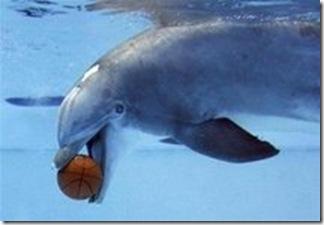Source - Agence Reuters. Dauphin captif jouant avec un ballon de basket