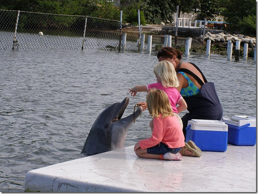 Un exemple des activités menées au Dolphin Research Center...