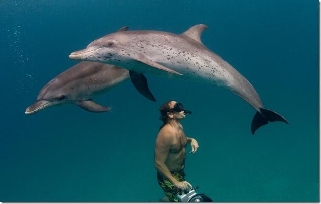 Comprendre le langage des dauphins est-il un rêve proche de devenir réalité ? Photo de  Willy Volk