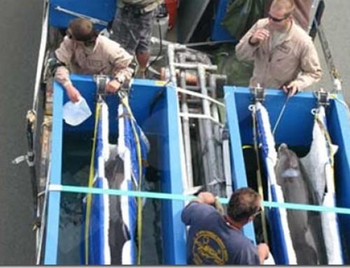 """Opération de déminage en Nouvelle-Calédonie pour quatre """"Navy Dolphins"""""""