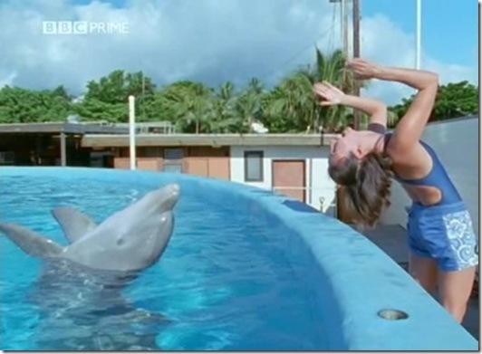 Image tirée de Dolphins Deep Thinkers, reportage dans lequel figure la dauphine Kelly