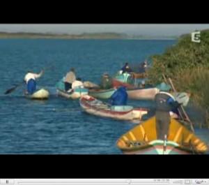 Documentaire : Dauphins, Les Cueilleurs de Vie