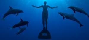 Documentaires et reportages sur les dauphins