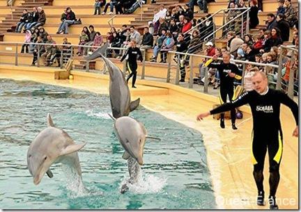 Le delphinarium du parc de Planète Sauvage à Port-Saint-Père