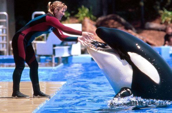L'enfance de Tilikum, orque tueuse