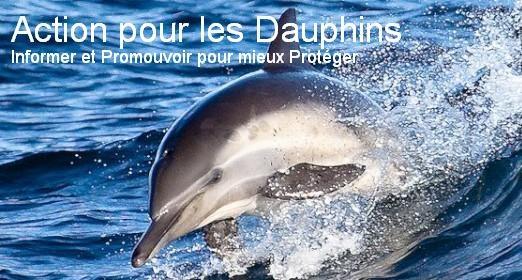 Action pour les dauphins LeBlogsurlesDauphins