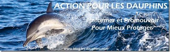 Action pour les dauphins - Le Blog sur les dauphins : Source d'information sur l'actualité des dauphins et des personnes impliquées dans leur défense, leur protection ou la recherche sur les cétacés.