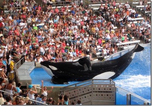 L'orque Tilikum, qui a tué sa dresseuse, a repris ses spectacles au SeaWorld d'Orlando