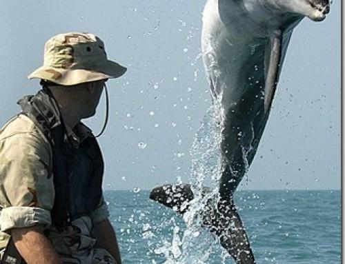 Une brève histoire de l'utilisation des dauphins militaires