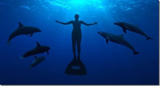 Réunissons-nous pour soutenir la cause des dauphins du Japon !