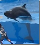 Japon : Un dauphin tente de sortir de son bassin - Photo : http://www.zigonet.com