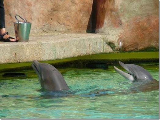 Tarif rencontre avec dauphins marineland