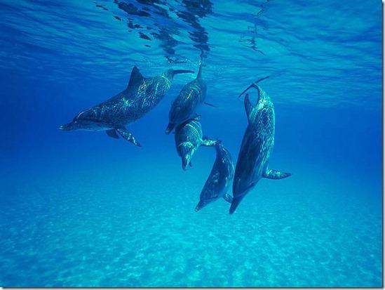 communication.chez.les.dauphins.photo.j.d.ebberly
