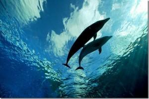 Des droits pour les dauphins
