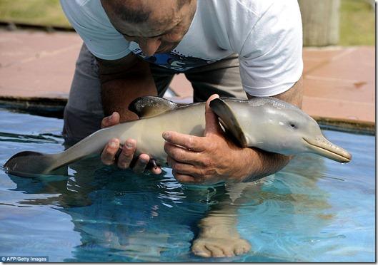 Nipper, le bébé dauphin