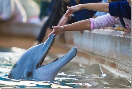 Les delphinariums : un lieu de souffrance et de mort pour les dauphins, les orques et les cétacés captifs