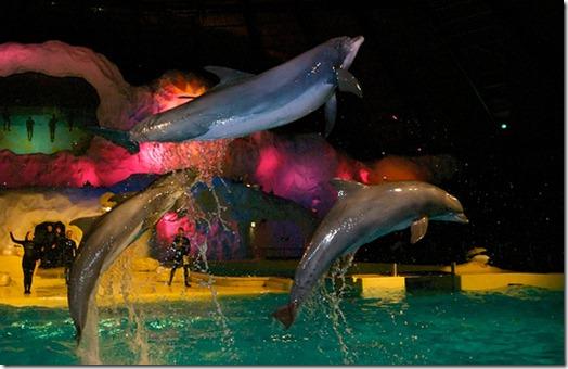 Un delphinarium et ses spectacles affligeants...