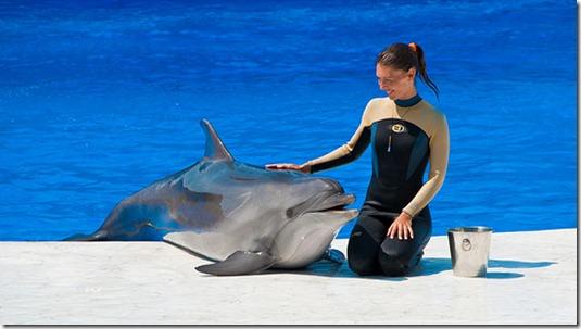 Le delphinarium de Sébastopol