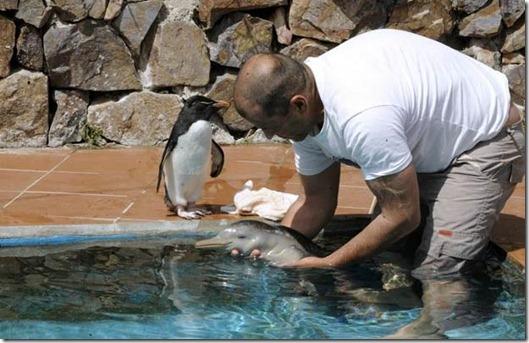 Le delphineau tenu dans l'eau