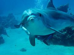 La Dolphin Connection