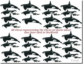 Les orques décédées à Seaworld