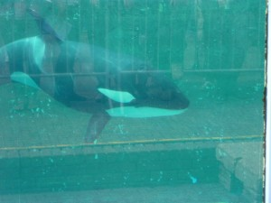 L'Orque Morgan - Photo de SSJGarfield
