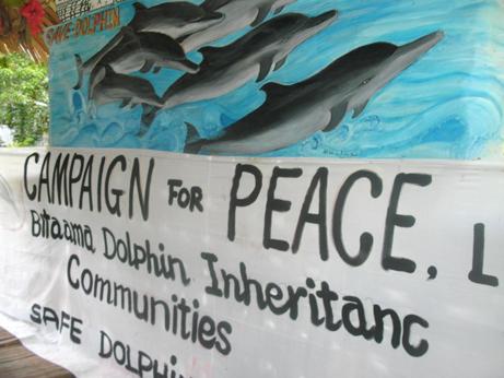 2000 dauphins épargnés aux îles Salomon