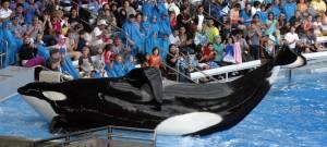 Notre objectif : faire interdire par la loi la captivité des dauphins et des cétacés