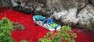 Informer le grand public sur les dauphins et les dangers qui pèsent sur eux